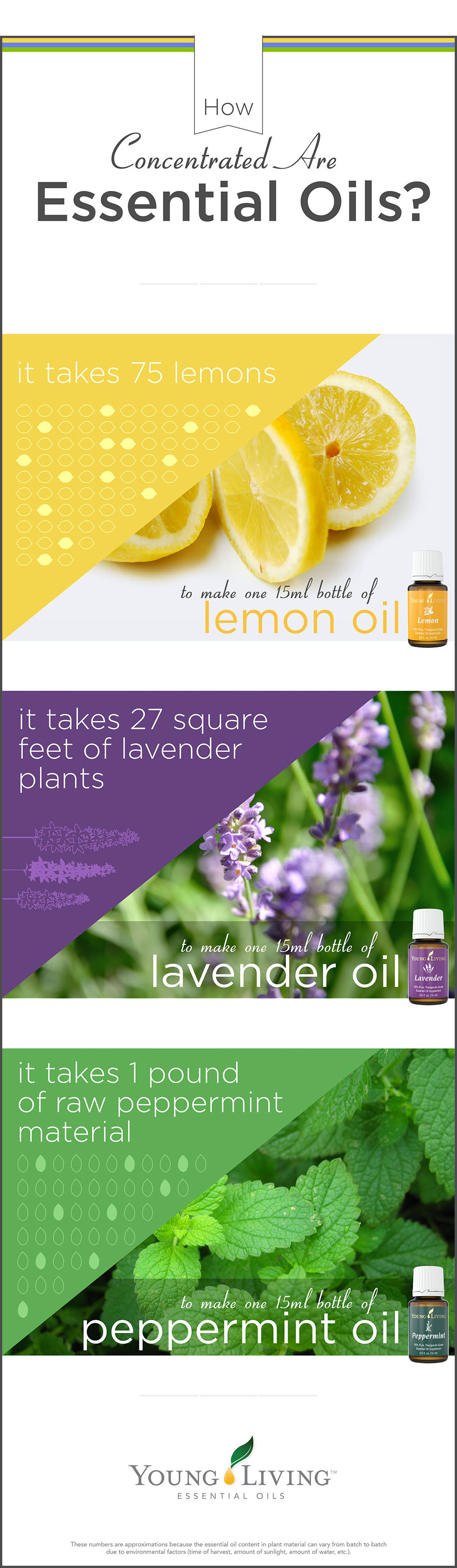 Young Living Essential Oils - How Concentrated Oils Are; For each 15ml bottle it takes: 75 lemons; 27 square feet of lavender plants; 1 pound of peppermint material.